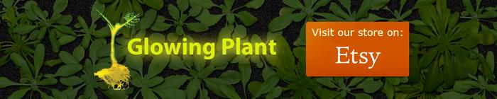 Glowing Plantオフィシャルサイトロゴ